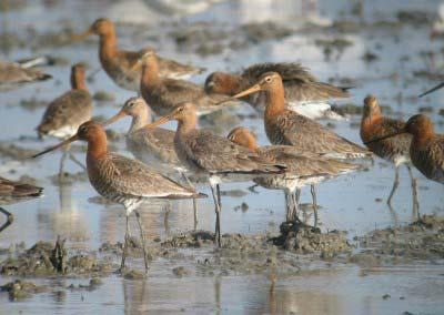 Les aus de l'Albufera